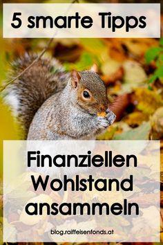Machen Sie es wie die Eichhörnchen und sammeln Sie sich finanziellen Wohlstand an! #wohlstand #geldanlage #sparen #fonds #geld #tipps #zinsen #ansammeln #eichhörnchen #sammeln #geldsammeln Alternative, Tricks, Animals, Become A Millionaire, Money Plant, Finance, Freedom, Animales, Animaux