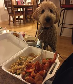Stealing a whiff of my humans' take out. We are home safe and watching Rockin' Eve! 2016 I'm coming for you (if I can stay up until midnight!).  #goldendoodle #goldendoodles #doodle #doodles #doodlesofinstagram #doodlesofinsta #goldendoodlesofinstagram #puppylove #puppy #puppiesofinstagram #dailydoodle #dogsofinstagram #dailyfluff #weeklyfluff #doodlelove #dailydoseofcute #aplacetolovedogs #yourdogstoday #fluffypack #golden #poodle #dogstagram #dailybark #dailypuppy #dog #goldendoodlecentral…