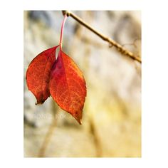 Nature photography Orange  Autumn Wall Decor rustic by gonulk, $30.00