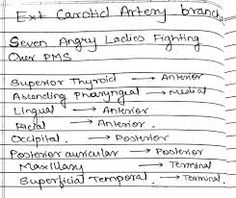 Image result for external carotid artery branches