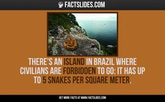 There's an Island in Brazil where civilians are forbidden to go: it has up to 5 snakes per square meter.