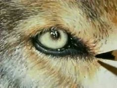 """Painting a Day Demonstration - Wolf Eyes by Roberta """"Roby"""" Baer"""