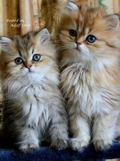 dating με γάτες