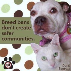 no one wins with bsl.