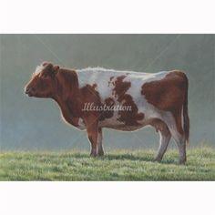 Britan cow illustration by Andrew Hutchinson