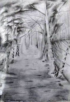 Aden Country Park, Mintlaw. graphite pencil on A4 cartridge paper.