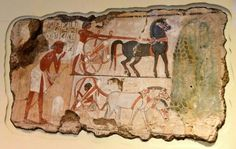 This scene from the tomb-chapel of Nebamun shows officials inspecting fields. A farmer checks the boundary marker of the field. Nearby, 2 chariots for the party of officials wait under the shade of sycomore-fig tree. Another smaller fragments belonging to this scene/wall, now in the Egyptian Museum in Berlin, show the grain being harvested and processed. The British Museum, London. Photo © Osama S. M. Amin.
