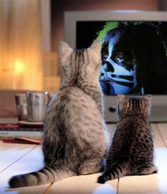 Cats Watching The Catman