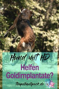 Was bringen Goldimplantate? -- Können diese einem Hund mit Hüftschaden oder HD schmerzfreie Bewegungen ermöglichen? | Hund | HD | Arthrose | Gesundheit | thepellmellpack.de