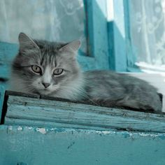I believe cats to be spirits come to earth.  A cat, I am sure, could walk on a cloud without coming through ~ Jules Verne