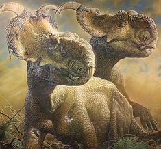 Pachyrhinosaurus - Wikipedia