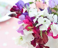 Bouquet de mariage - http://www.joyeuxmariage.fr