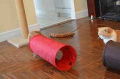The new and improved cat cannon!