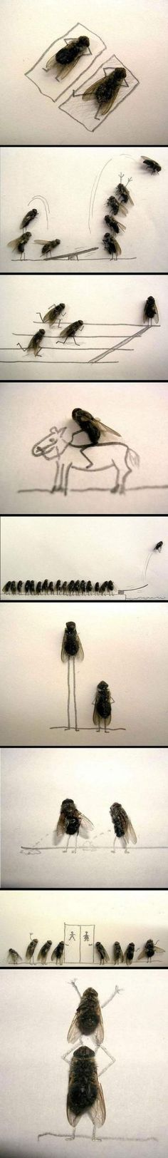 What One Guy Does With Dead Flies (And A Lot Of Spare Time) Is Odd...But…