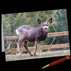 Deer Photography, Mule Deer, Pacific Northwest, Photo Greeting Cards, Kangaroo, Giraffe, Wildlife, My Etsy Shop, Hdr