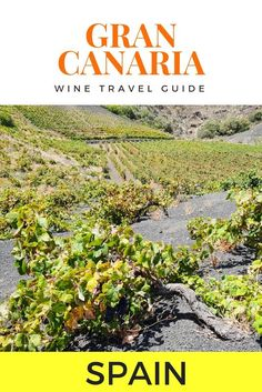 Gran Canaria Wine Guide: How to tour Gran Canaria in search of Gran Canarian wine bodegas, from a Spanish resident and wine lover Spain And Portugal, Portugal Travel, Menorca, Malaga, Tenerife, Granada, Valencia, Ibiza, Madrid