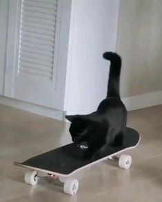 Cats Doing Funny Things, Funny Cute Cats, Cute Cat Gif, Cute Funny Animals, Cute Baby Animals, Cute Puppies And Kittens, Kittens Cutest, Beautiful Cats, Animals Beautiful