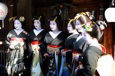 New Year 2012 - Hanafusa family: maiko Kikushino, geiko Kikutsuru, Kikuno, Kikumaru, Kikuyu and maiko Kikune
