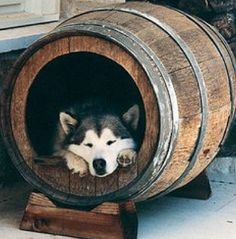 love this dog house