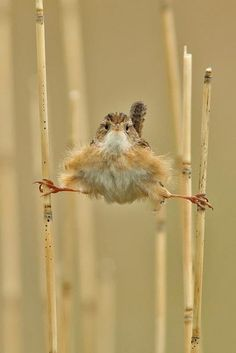 Don't panic! I just love wrens. They are the silliest birds.
