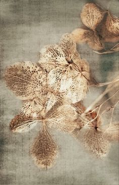 . Golden Aesthetics, Wall Painting Decor, Feuille D'or, Gold Leaf Art, Pink Wallpaper Iphone, Grey And Gold, Calligraphy Art, Art Pictures, Diy Art