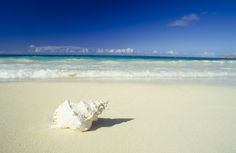 Shell lying on beach