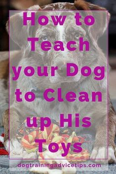 Dog Training Pictures - CLICK THE IMAGE for Many Dog Obedience and Care Ideas. 44285287 #dog #dogobediencetraining