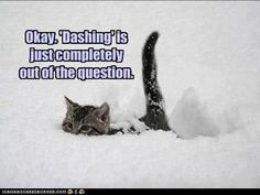 Dashing through the snow......