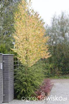 Ogród z lustrem - strona 325 - Forum ogrodnicze - Ogrodowisko