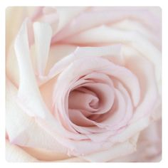 Rose is not only beautiful to the eye but it is beautiful for the skin as well. Rosehip Oil is incredibly moisturising and is a nurturing product if you have sensitive skin! xxx #KORAOrganics