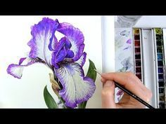 How to paint realistic botanical bearded Iris in watercolour with Anna Mason - YouTube