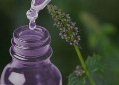 Herbalism, Essential Oils, Healing, Herbs, Soaps, Oil, Herbal Medicine, Herb, Essential Oil Uses