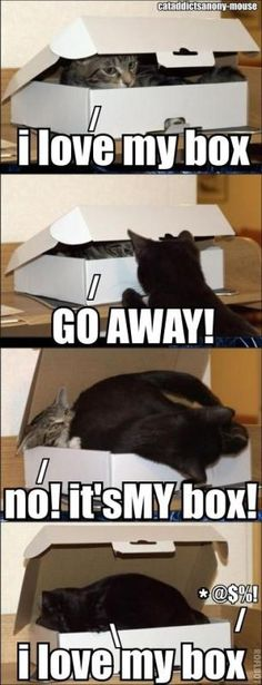 This would be my cats for sure.  Pepper having fun and Silber coming to ruin all the fun