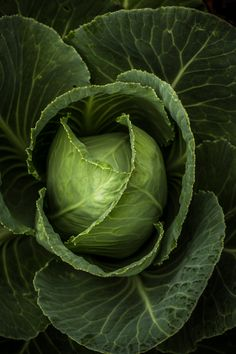 Fruit And Veg, Fruits And Vegetables, Concept Photography, Food Photography, Photo Fruit, Shades Of Green, Food Art, Inspiration, Cabbages