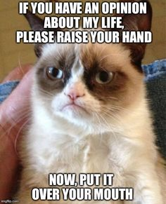 If you have an opinion about my life, please raise your hand. Now put it over your mouth. Grumpy Cat