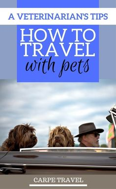 Tips for Traveling with Pets.According to a Veterinarian - Places to Travel - Five Cat Dog Travel, Family Travel, Travel Tips, Travel Ideas, Travel Info, Travel Stuff, Travel Hacks, Travel Advice, Travel Inspiration