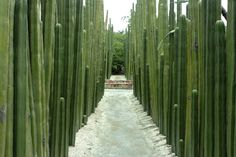 iron cactus fence - Google Search