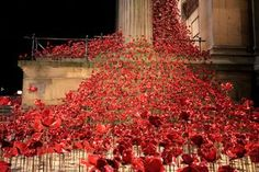 Liverpool Poppies at St George's Hall - see them lit up at night - Liverpool Echo.
