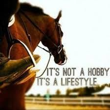 My life is based around God and my horse. A hobby is something that you do in your free time, I have no free time because of my horse. Cute Horses, Pretty Horses, Horse Love, Beautiful Horses, Equine Quotes, Equestrian Quotes, Equestrian Outfits, Inspirational Horse Quotes, Horse Riding Quotes