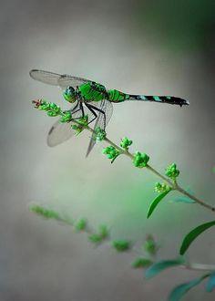 Alimentndose  de verde, verde fourescante...