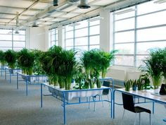 "Love this. Looking at greenery refreshes the eyes, esp. after looking at computer screens all day. ""Julio Radesca de Carvalho designed and created a project called ""Personal Fresh Air"" as his graduate work from Design Academy Eindhoven. The glorified cubicles are desks designed to incorporate a dozen plants, which both help to clean the air in offices, as well as provide a privacy and shelter alternative to the typical office cubicle."""