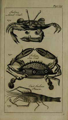 Crustacea. A new and accurate system of natural history ... v.3  London,Printed for J. Newbery,1763.  Biodiversitylibrary. Biodivlibrary. BHL. Biodiversity Heritage Library