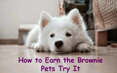 How to Earn Brownie Badges and Try Its: How to Earn the Brownie Pets Badge (It's…