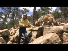 Please Help Wild Spirit Wolf Sanctuarys Wild Rescues