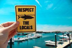 Respect The Locals Shark Sticker - Bumper Sticker - Laptop Sticker - Board sticker - Shark Sticker - Surf Sticker - Beach Sticker - Ocean Sticker - Surfer - Sharks - Water bottle - Water proof - Weather proof - Sharks - One Ocean - sticker - stickers - bumper sticker