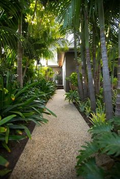 Creating a tropical suburban idyll You are in the right place about tropical garden ideas outdoor sh