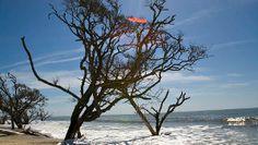 Edisto Island's Botany Bay Preserves Plantation Landscape