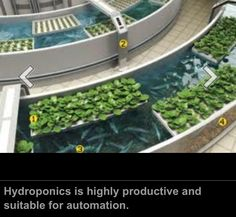 Hydroponic and fish pond