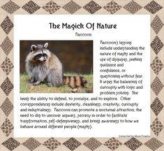 Magick Of Nature - Raccoon Power Animal, Animal Magic, Animal Spirit Guides, Spirit Animal, Magick, Witchcraft, Nature Spirits, Season Of The Witch, Animal Totems