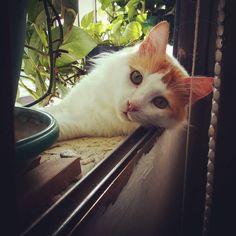 en la ventana y entre plantas..soy más feliz